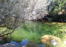 Charca Verde