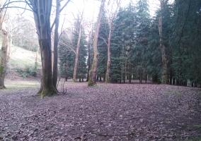 Bosques en el entorno