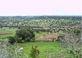 Zona natural con prados en primavera
