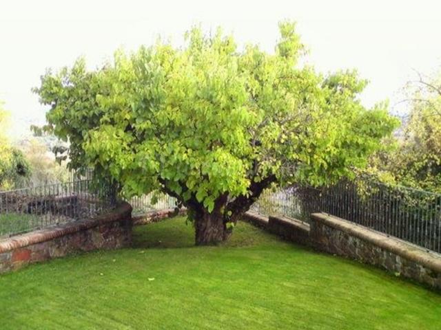Caba as vallecino en manzanal de los infantes zamora for Casa jardin culebra