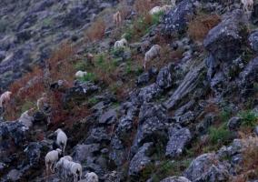 Zonas naturales con ganado