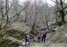 Bosque de Balgerri