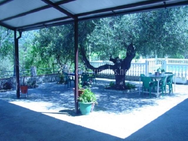 Terraza cubierta y árbol