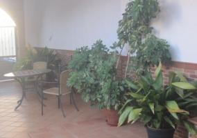 Vistas del patio con planta