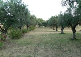 Zona de campos