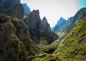 prado y montaña