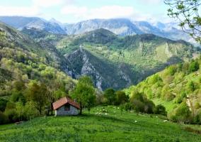 montaña y prado