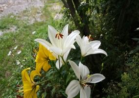 Jardín de la temporada