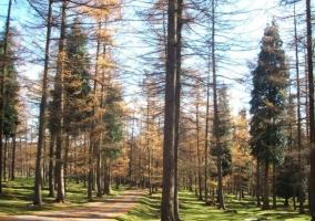 Bosque del exterior