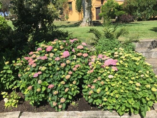 Flora del jardín