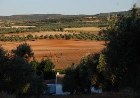 Vistas del paisaje de la finca con olivares al fondo