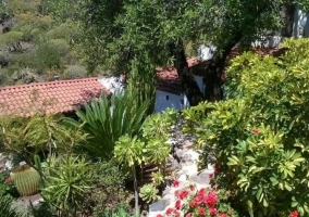 Vistas de las zonas exteriores con plantas de la zona