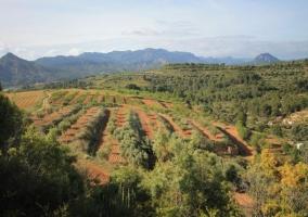 Zona de campos y buenas vistas