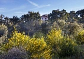 Vistas de la casa entre espacios naturales
