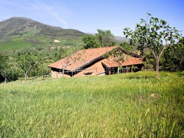 Acceso a la casa entre espacios verdes
