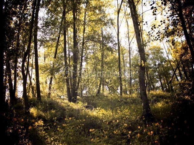 Bosque del manantial