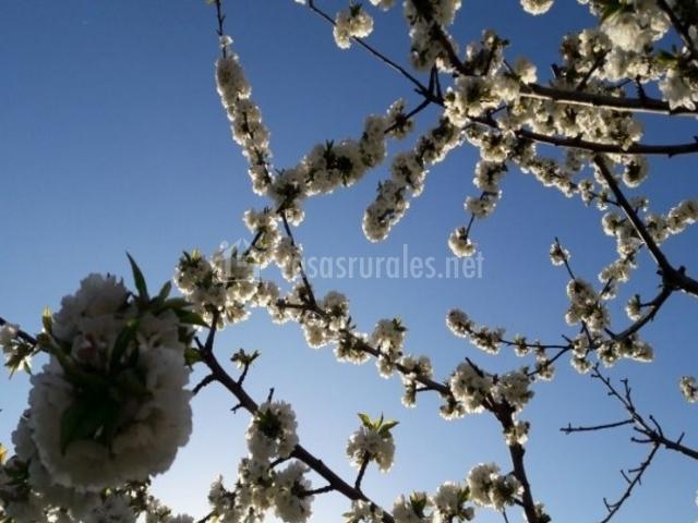 Vistas de los cerezos en fuera