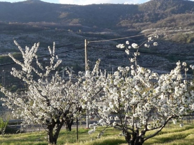 Vistas de los cerezos y el entorno