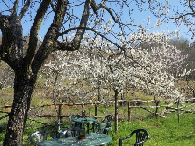 Jardín con mobiliario bajo un árbol