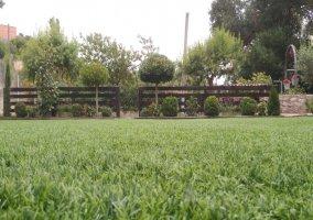 Cesped y plantas del jardín