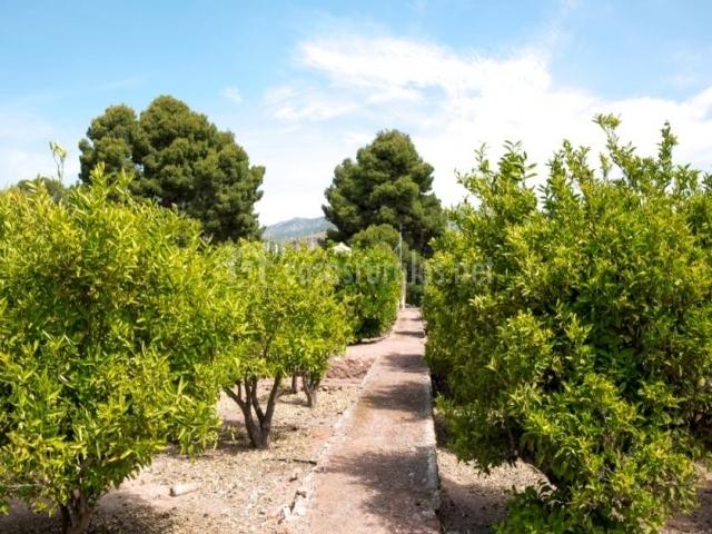 Vistas de nuestro huerto de mandarinos