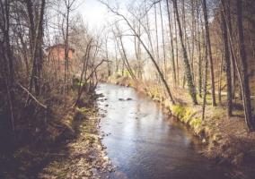 Zonas naturales con bosques