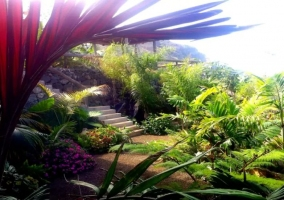 Vistas de las zonas verdes tropicales