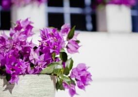 Vistas de los detalles con flores moradas