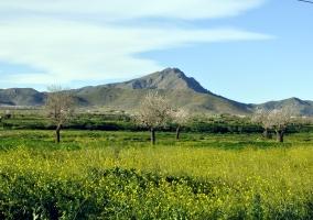 Sierra del Algarrobo