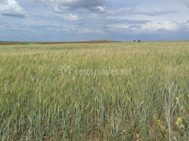 Zona de campos de cereales