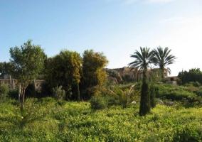 Plantas y árboles del jardín