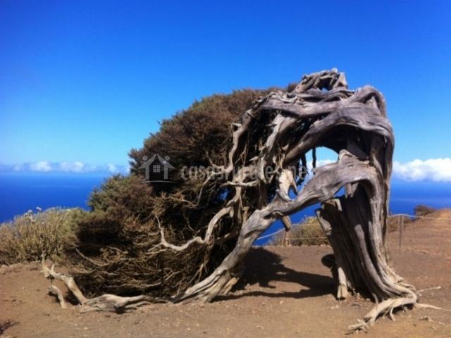 Árbol simbólico de la Isla