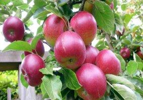 Huerta con árboles frutales
