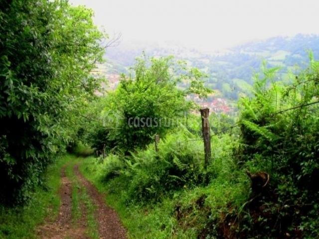Caminos del Parque natural de Redes