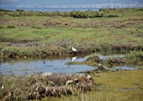 Aves acuáticas en el Delta del Ebro