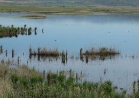 Laguna de Pitillas