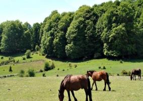 Caballos en la Sierra de Urbasa
