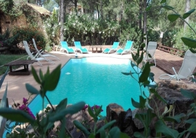 Árboles rodeando la piscina