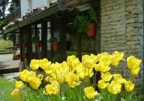 Exterior jardín