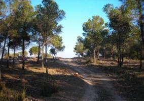 Entorno El Pinar