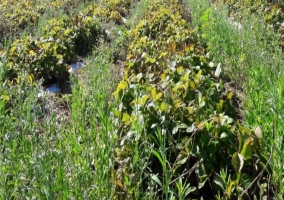 Entorno cultivo de fresas