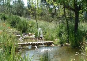Entorno estanque