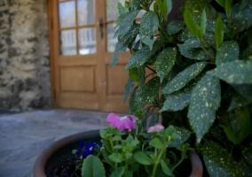 Vistas de las plantas en el porche de la casa