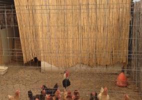 Exterior gallinas