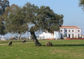 Vistas de la casa con olivos.JPG