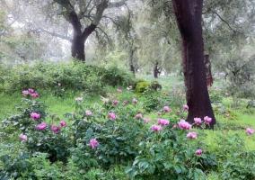 Zonas verdes en el entorno