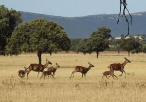 Zonas naturales con fauna