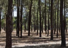 Zona de bosques en los alrededores