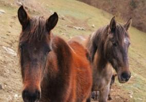 Vistas de los caballos