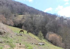 Zona natural con caballos pastando